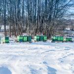 Bienenstand im Winter