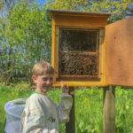 Schaukasten für Bienen